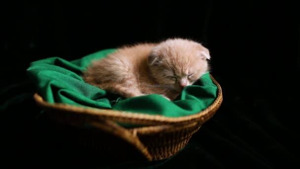 Cute kitten sleeping in a basket at home, British shorthair cat