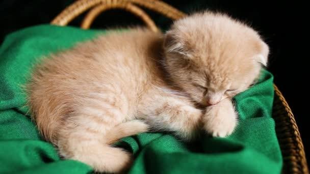 Aranyos cica alszik egy kosárban otthon, Brit gyorsírás macska