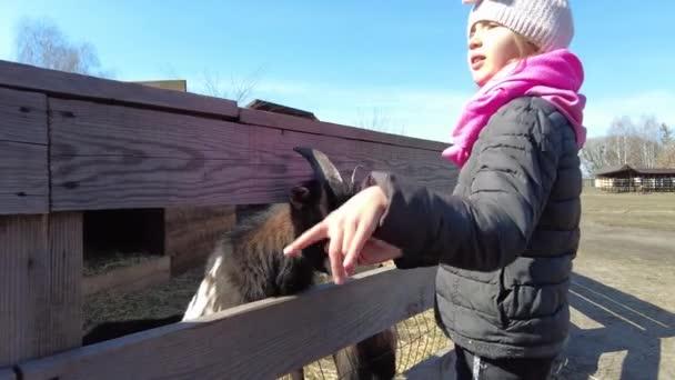 Zeitlupe kleines Mädchen kratzt Ziegenkopf, Tierhof,
