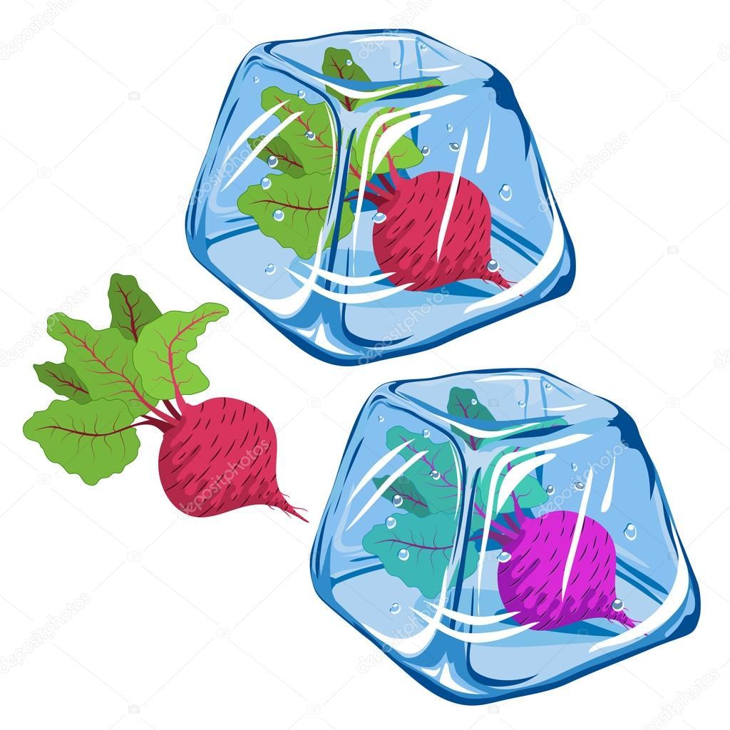 Vector Frozen beetroot in ice cube isolated on white background EPS 8.