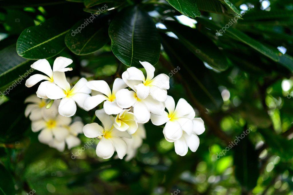 White flower , green leaves background