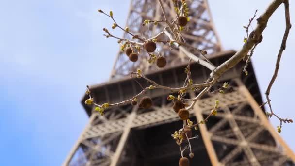 Eiffel-torony, gesztenye, világos, nagy kék égen ága