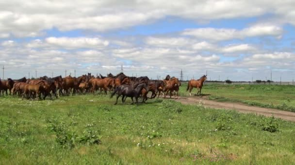 Csorda ló vágtató a háttérben a zöld mező
