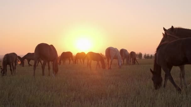 západ slunce na poli s pasoucími se koňmi