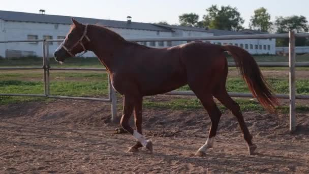kecses ló a tanyán
