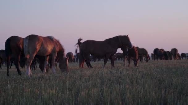 Stádo koní na louce, večerní pohled