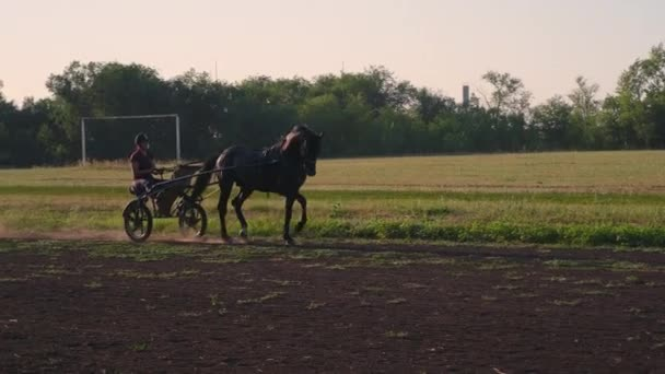Woman riding horse in lightweight cart along farmland