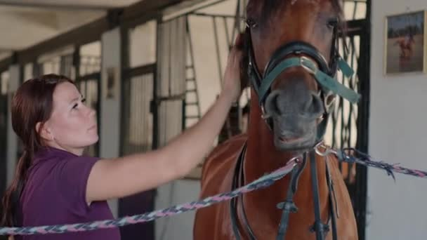 Female brushing excited horse standing in stable