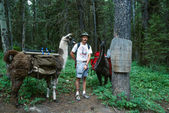 Man Posing with Two Llamas Bob Marshall Wilderness Sign Post