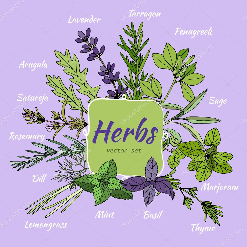 Set of herbs for food and cosmetic.