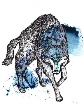 Wolf watercolor and ink illustration
