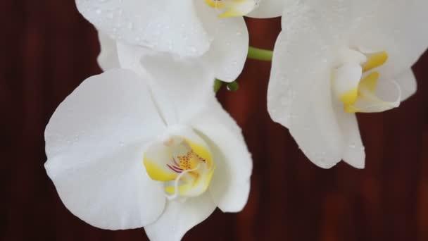 Květy orchidejí kapkami vody po postřiku