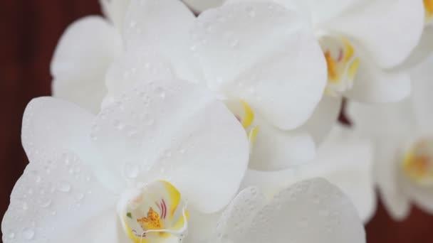 Orchidea virágok vízcseppek permetezés után
