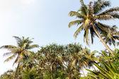 Photo Palm trees, beach.