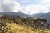 Fotografie Krajina v národní Park Hortonské pláně, Srí Lanka