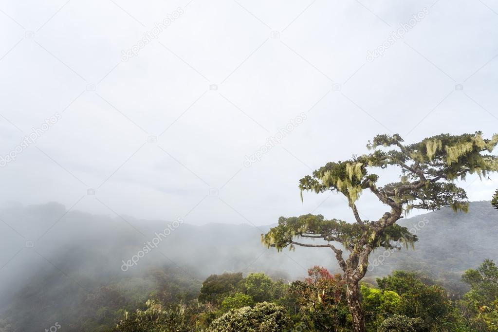 Landscape in Horton Plains National Park, Sri Lanka.