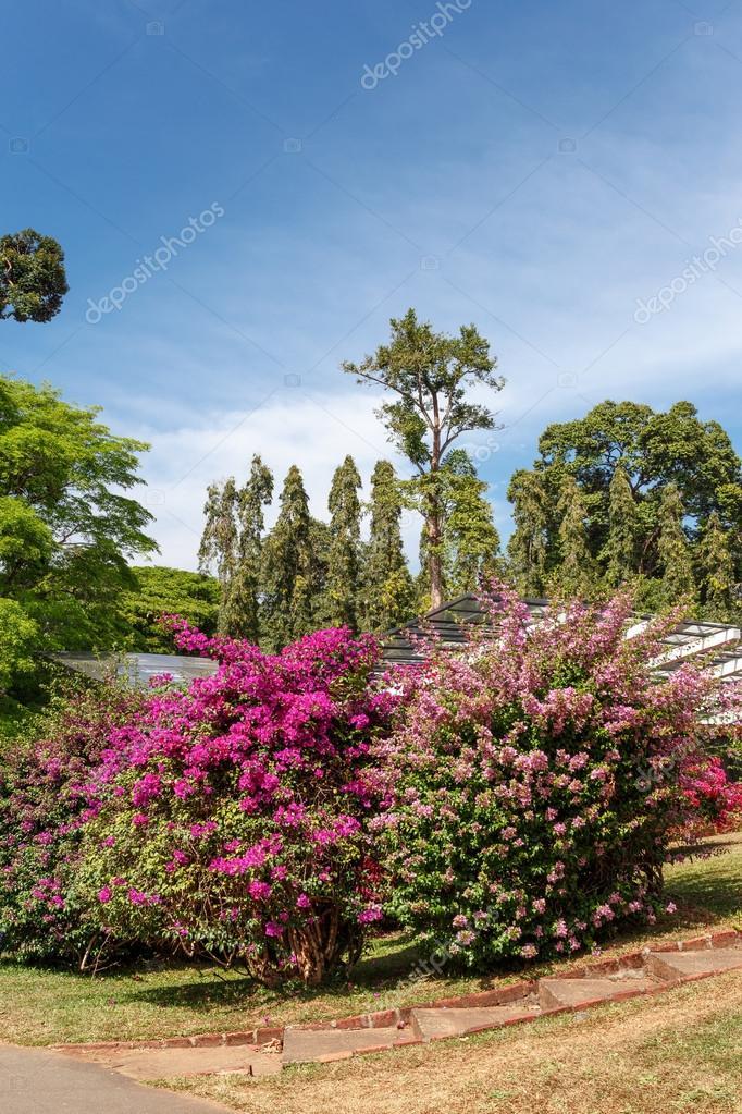 Beautiful nature. Peradeniya. Sri Lanka.