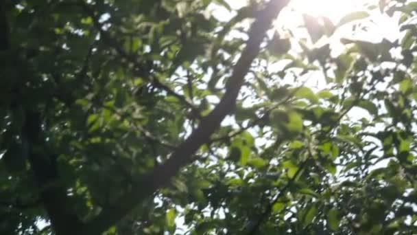 Nap sugarai besütött a fák, természet