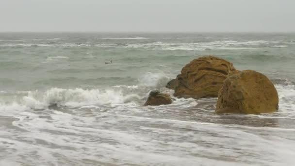 Magányos hattyú fodrozódó durva tenger homokos tengerpart, sárga sziklák, sűrű szürke ég