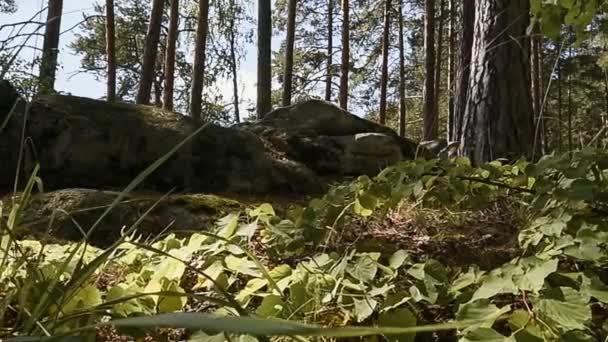 Horského lesa. Kameny. Tráva. Panorama