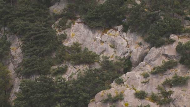 Gabbiano che vola sullo sfondo di rocce e alberi.