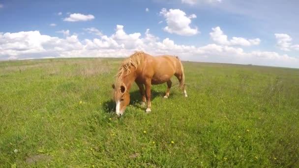 pásli koně je zelené pastviny