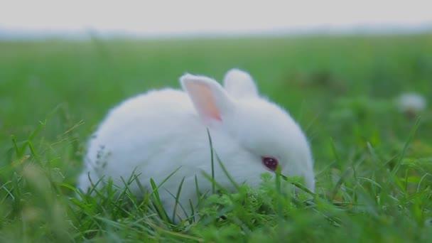 Kaninchen auf grünem Gras, weißes Kaninchen kleines Kaninchen