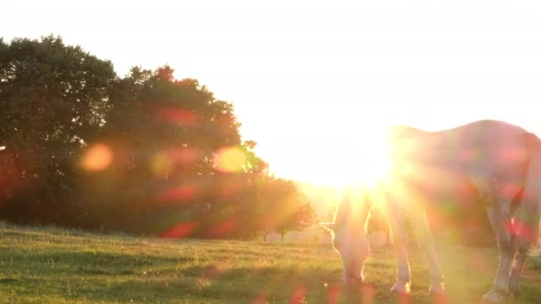 White horse grazing in a meadow in a reserve in California, USA. Slow motion