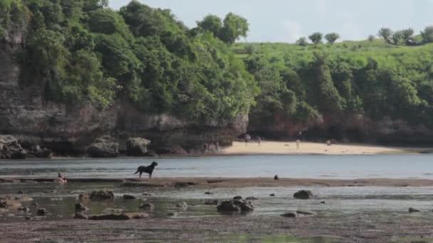 Černý Labrador, stojící na pláži