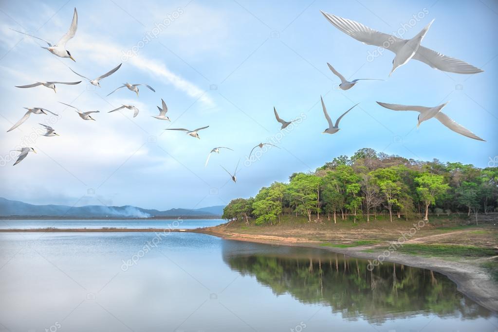 Image result for bird flying over landscape