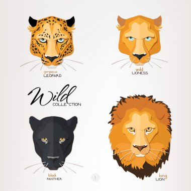 Leopard, lioness, panther and lion