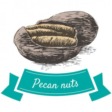 Vector colorful illustration of pecan nuts