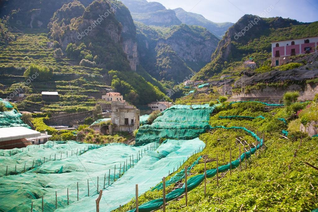 Italy Vineyard and orange garden hills