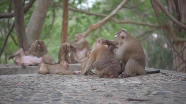 Vita familiare di scimmia