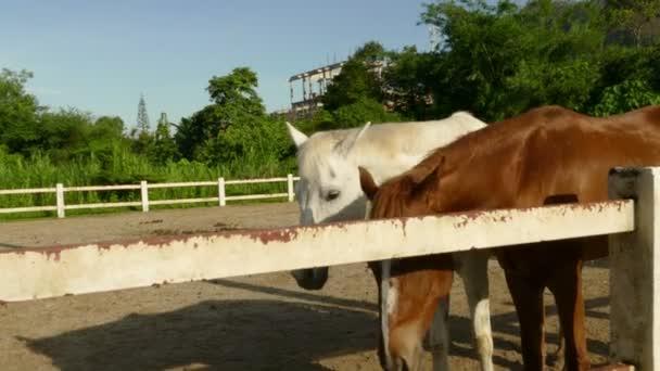 Pferdeställe im Takt.