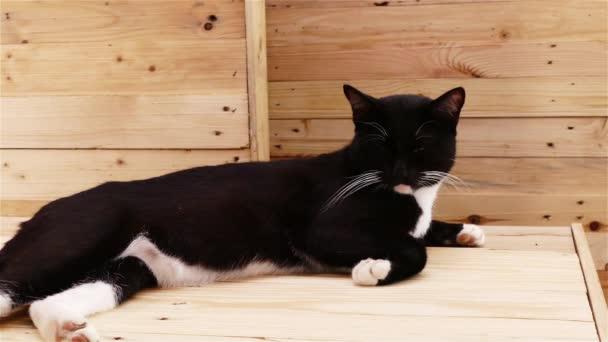 schwarze Katze legt sich hin