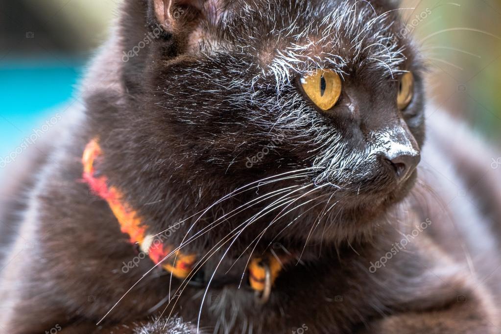 černá kočička mokré obrázky