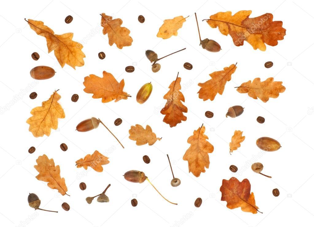 Isol s automne imprimer avec grains de caf glands et - Image feuille automne ...