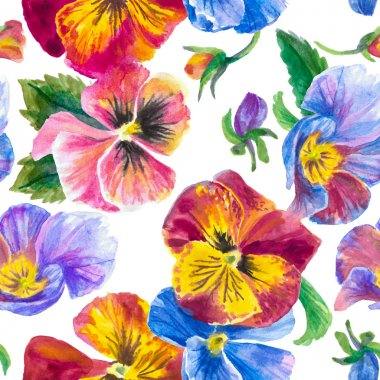 Colorful pattern, pansies isolated on white background.  Watercolor painting