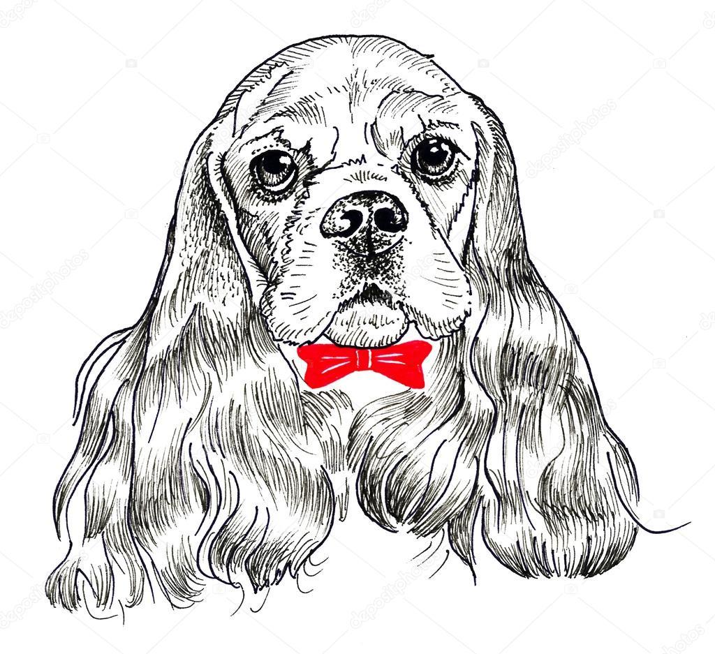 Cocker spaniel pies portret drukuj i wz r rysunek - Dessin de cocker ...
