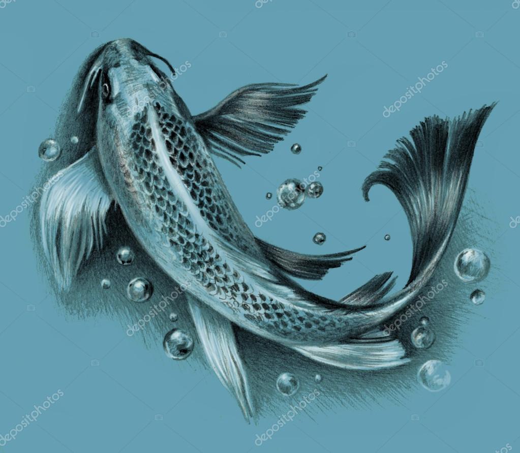 Gut gemocht poissons de koi japonais isolés sur un fond bleu. Dessin au crayon  NE79