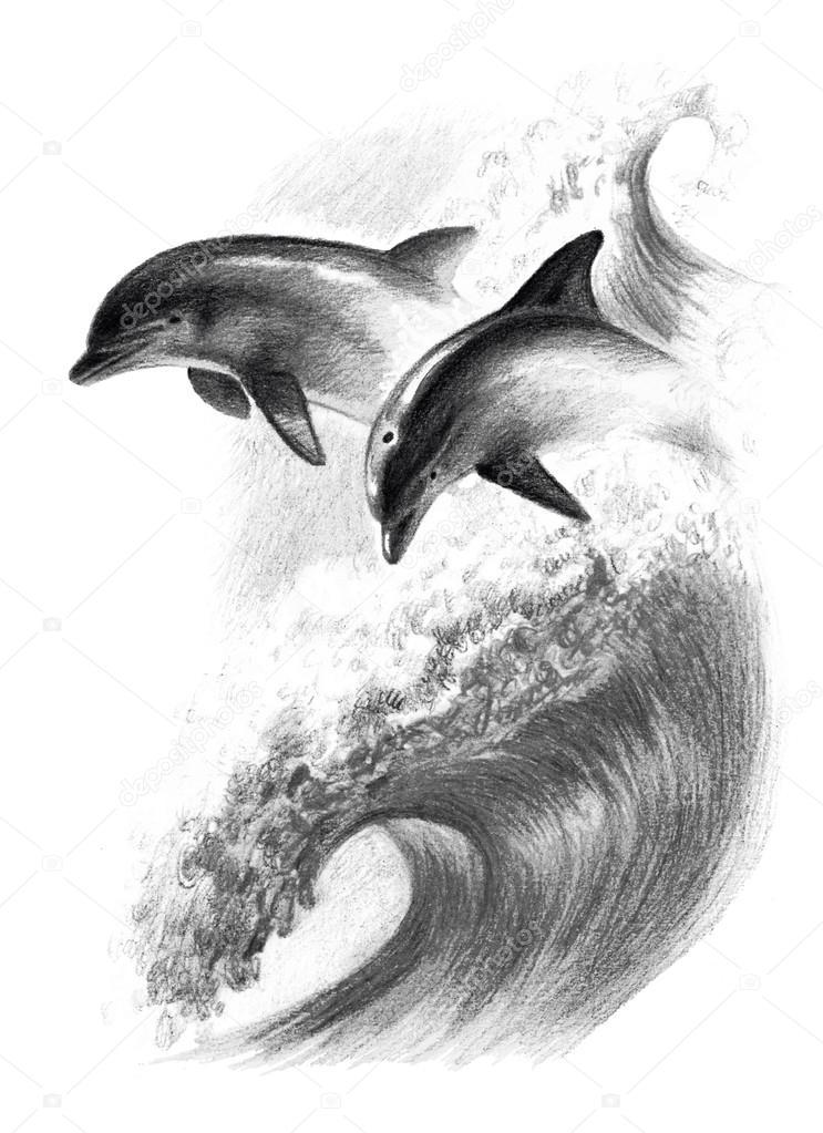 Disegno A Matita Monocromatico Due Delfini Su Un Onda Foto Stock