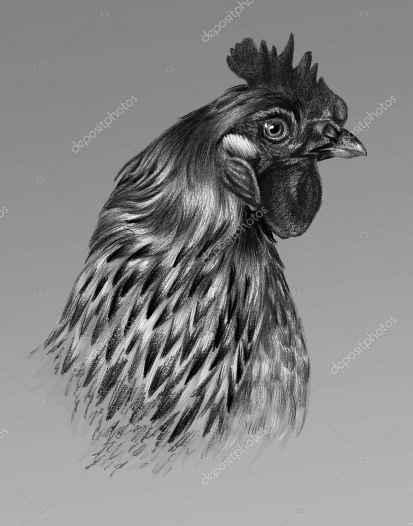 how to draw a chicken head