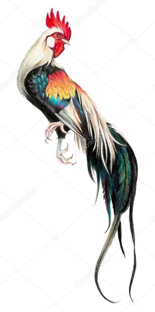 Imágenes De Phoenix Gallo Color De Dibujo Con Lápices De Acuarela