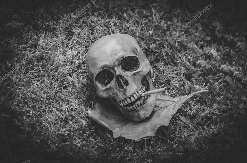 Human skull smoking the cigarette on grass background vintage black white tone still life photography style photo by kadsada23gmail com