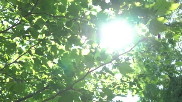 Reálném čase strom odlesku Sun Shine