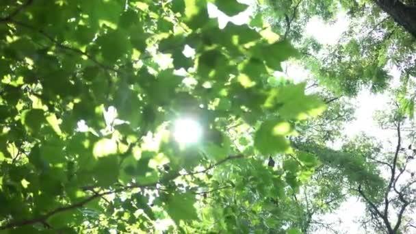 Strom odlesk slunce svítí