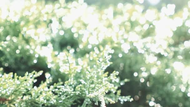 Bush zöld növények ágak levelei Dof