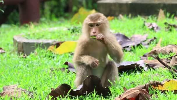 Roztomilá opička sedící na zemi.