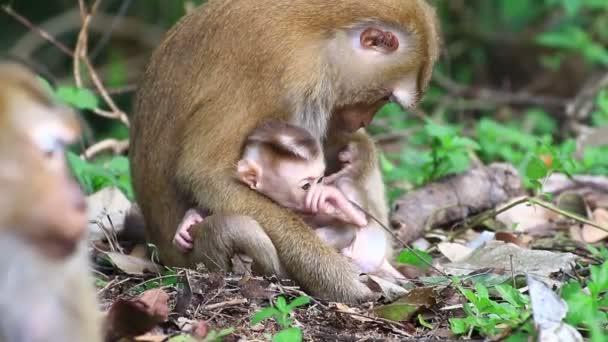 Affe-Pflege-Kind
